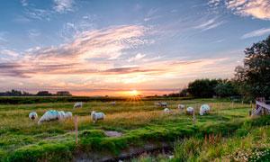 夕阳下的草原羊群高清摄影图片