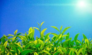 阳光下的春季幼苗高清摄影图片