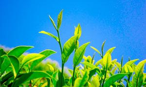 蓝天下的植物幼苗高清摄影图片