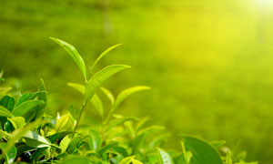 逆光下的春季植物幼苗摄影图片
