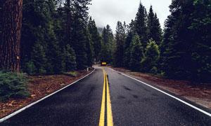雨后森林中的道路风光摄影图片
