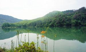 湖边美丽的黄花菜美景摄影图片