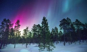 夜晚森林中美丽的极光高清摄影图片