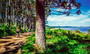 湖边道路上骑行的游客摄影图片