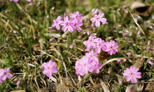 草地上盛开的花朵高清摄影图片