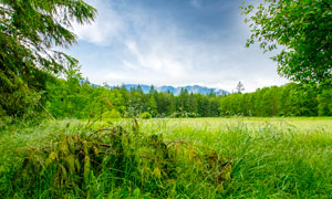 山林中美丽的草地高清摄影图片