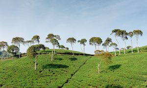 山坡草地和树木高清摄影图片