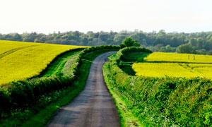 田园中通向树林的道路高清摄影图片