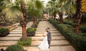 棕榈树与一对恋人婚纱摄影原片素材
