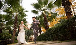 公园棕榈树风光与人物婚纱高清原片