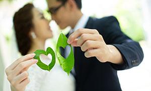 在恋人手中的绿叶特写摄影高清原片