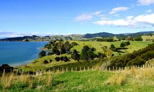 新西兰卡瓦卡瓦湾自然风光摄影图片