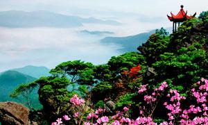 山顶美丽杜鹃花和亭子摄影图片