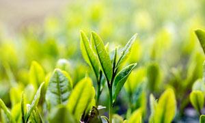 清新风格的植物幼苗高清摄影图片