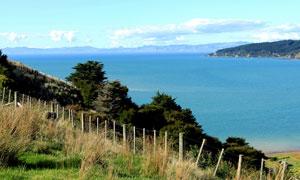 新西兰卡瓦卡瓦湾美景高清摄影图片