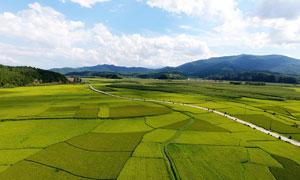 田野美丽的农作物农田和道路摄影图片
