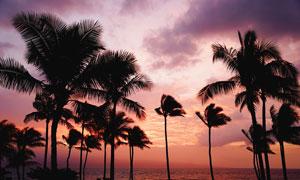 黄昏下海边美丽的椰树剪影摄影图片