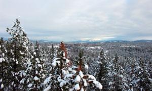 森林雪后树木积雪景观摄影图片