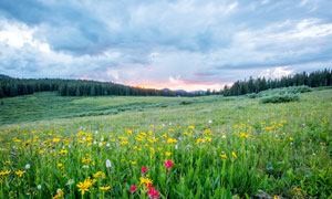黄昏下漫山遍野的野花高清摄影图片