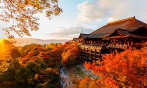 秋季日本建筑高清摄影图片