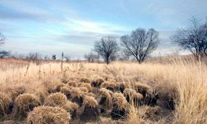 秋季農田和草叢高清攝影圖片