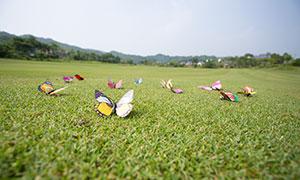 草地上的蝴蝶饰品特写摄影高清原片