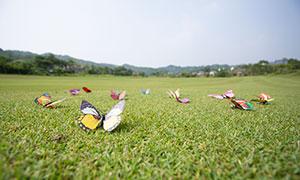 放在草地上的蝴蝶饰品高清原片素材