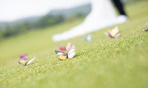 摆放在球场上的小蝴蝶饰品摄影原片