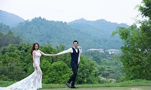 枝繁叶茂树木风景婚纱摄影高清原片