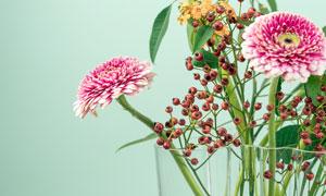 花瓶中盛开的非洲菊花朵摄影图片