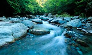 森林中的小溪流水高清摄影图片
