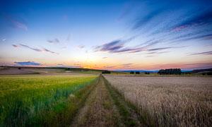 夕阳下的麦田美景高清摄影图片