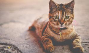 趴在地上的可爱小猫咪高清摄影图片