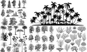黑白效果写实树木植物设计矢量素材