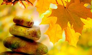 秋季枫叶下光滑的石头摄影图片