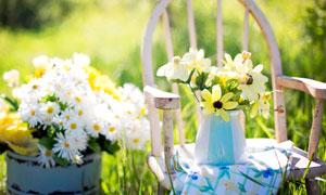 春季美丽的菊花插花高清摄影图片