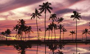 夕陽下湖邊椰樹倒影高清攝影圖片