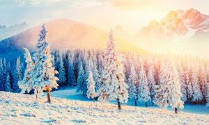 冬季山頂美麗的松樹和雪景攝影圖片