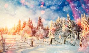 夕陽下的森林雪景高清攝影圖片