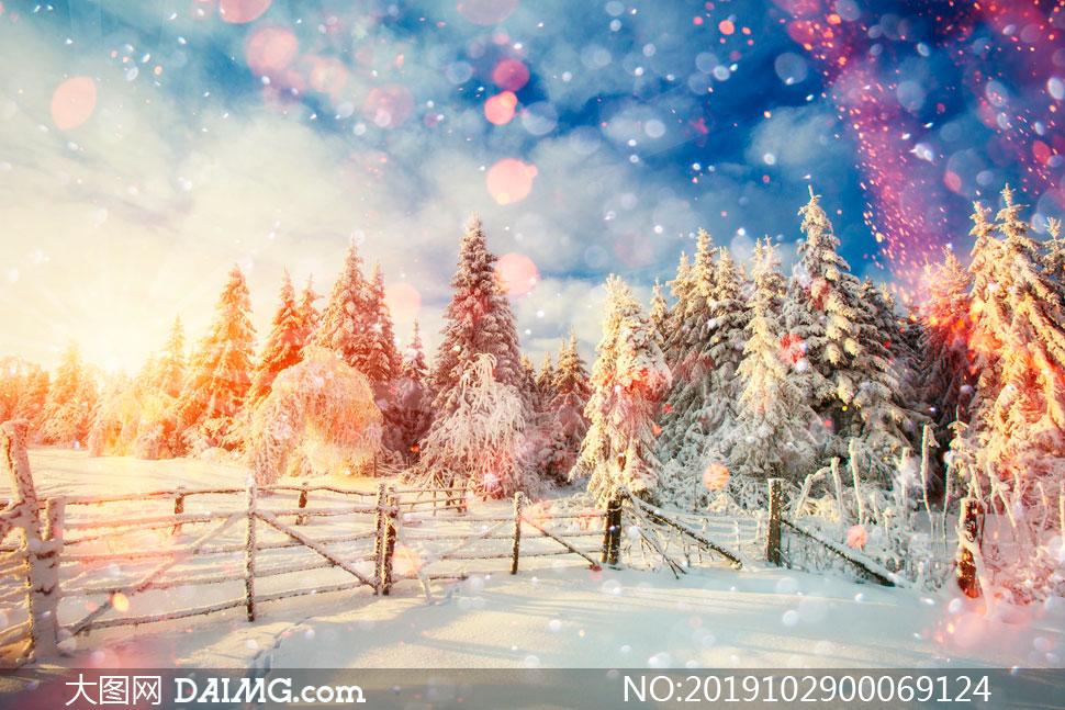 夕阳下的森林雪景高清摄影图片