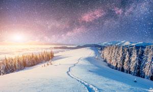 夜空下的森林雪景高清摄影图片