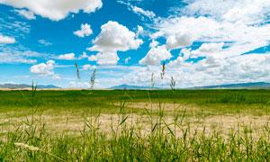 金子海风景区草地美景摄影图片