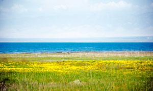 青海湖湖边美丽风光高清摄影图片