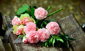 靠椅上的玫瑰花近景摄影图片