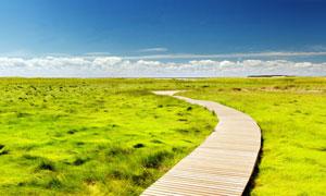 草原小的木条小道摄影图片