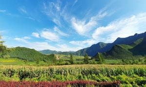 藍天下的青山和玉米地攝影圖片