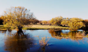 金秋高原上的河流和树木摄影图片
