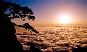 庐山上的迎客松日出景观摄影图片