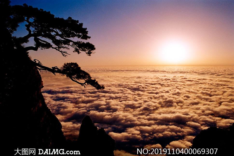 廬山上的迎客松日出景觀攝影圖片