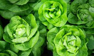 绿色蔬菜近景高清摄影图片